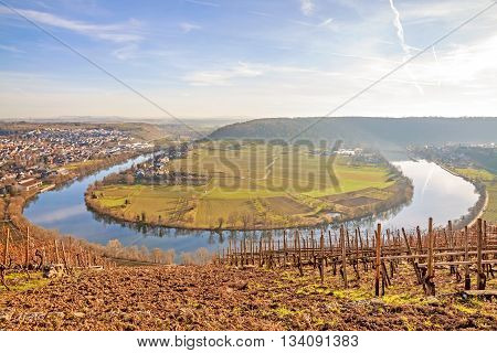 Neckar loop in Hessigheim - panorama in the vineyards