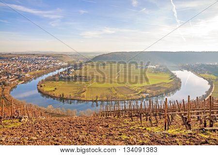 Neckar loop in Hessigheim - panorama in the vineyards