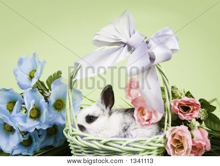 adorable baby bunny rabbits with easter props poster