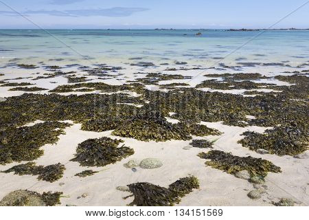 Seaweed on a beach on the island of Herm, UK