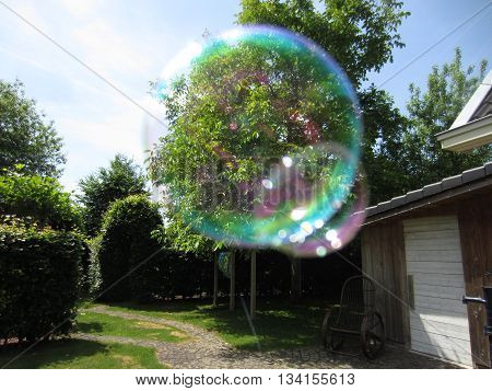 Big tree seen through a floating soap bubble