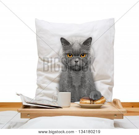 cat eats in bed and drink -- isolated on white
