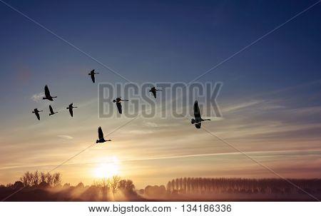 Sandhill cranes at sunrise or sunset spring or autumn concept