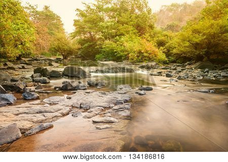 a serene creek and green forest in summer