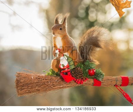 red squirrel standing on branch with santa