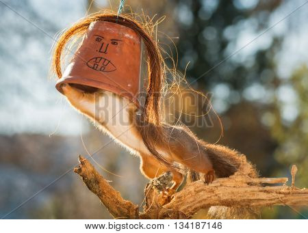 red squirrel standing on a tree trunk with a with scary face