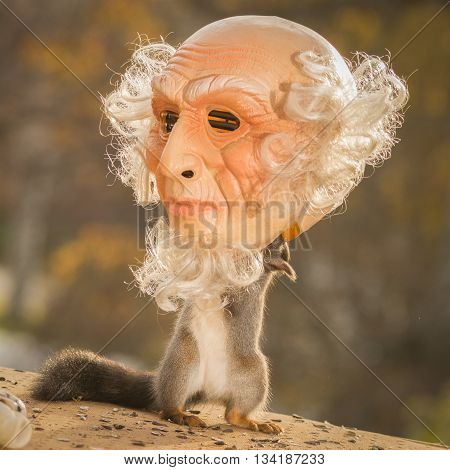red squirrel standing with a man head