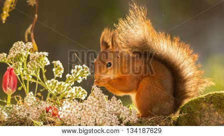 red squirrel is standing with flowers and plants