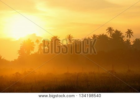 Golden hours with mist at the morning day in Malaysia