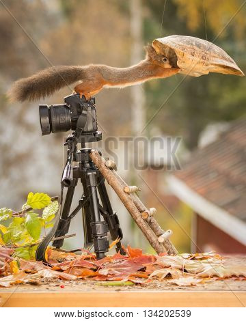 red squirrel is standing on a camera touching a turtle shell