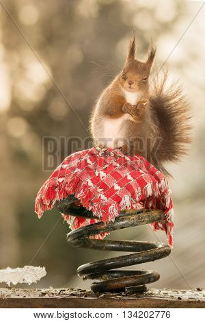 red squirrel is standing on iron spiral with red cloth
