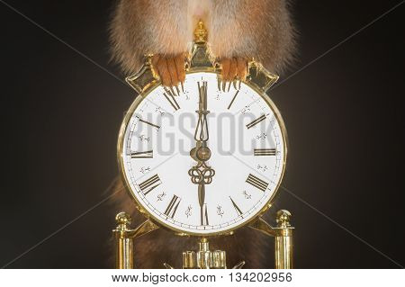 feet of red squirrel standing on a clock