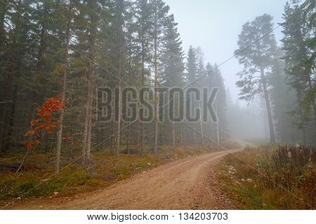 road in forest with mist during autumn
