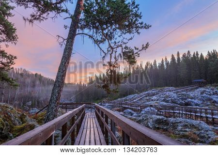 evening forest mountain landscape with mist and bridges