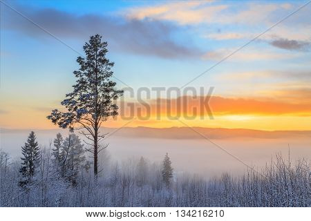 snow in tree during sunset with mist