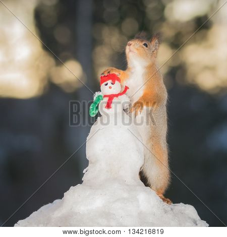 red squirrel standing with a snowman in snow
