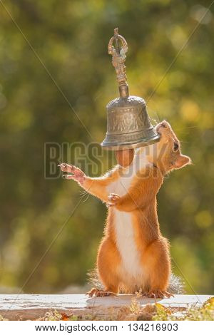 female red squirrel standing with a bell and nut