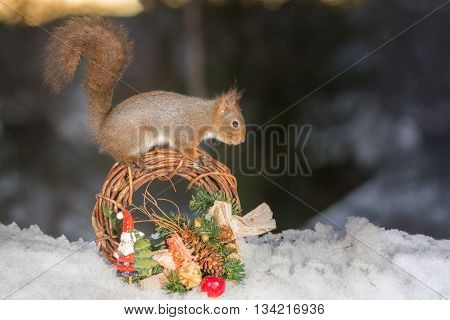 red squirrel with a santa and christmas garland
