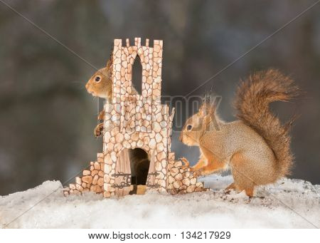 red squirrels in the snow with castle