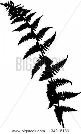 illustration with fern silhouette isolated on white background
