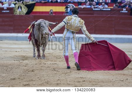 Jaen Spain - October 18 2010: The Spanish Bullfighter Cayetano Rivera bullfighting with the crutch in the Bullring of Jaen Spain