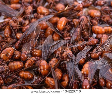 Close-up subterranean ants with back ground .