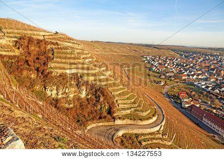 View over the vineyards (Hessigheimer Felsengaerten) town Hessigheim on the right