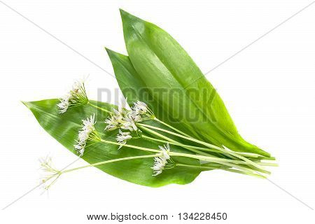 Medicinal plant ramson (allium ursinum) isolated on white background. Ramson - edible plant nectariferous and is used in horticulture