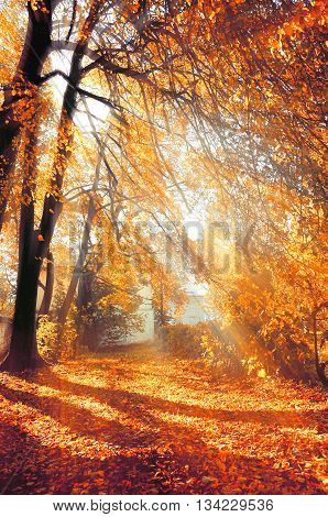 Autumn park covered with fallen leaves in bright sunshine- colorful autumn landscape in nice sunny weather picturesque autumn landscape view