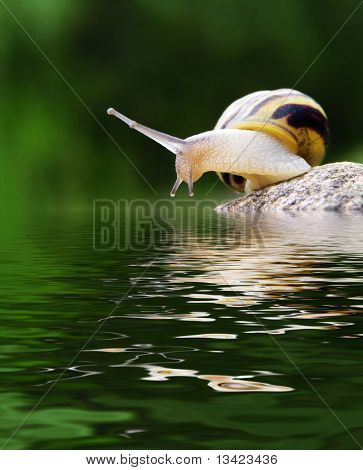 snail on the stone above the water
