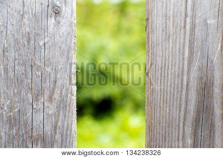 Old wooden fence grey color. Through the large cracks visible greens.