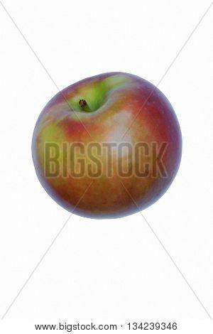 McIntosh apple (Malus domestica McIntosh). Image of single apple isolated on white background