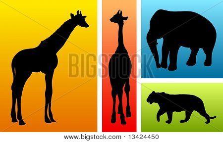 Animals from safari / zoo poster