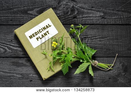 Medicinal plant Geum urbanum (also known as wood avens herb Bennet colewort and St. Benedict's herb) and herbalist handbook. Used in herbal medicine cooking food for animals bee plant and insecticide