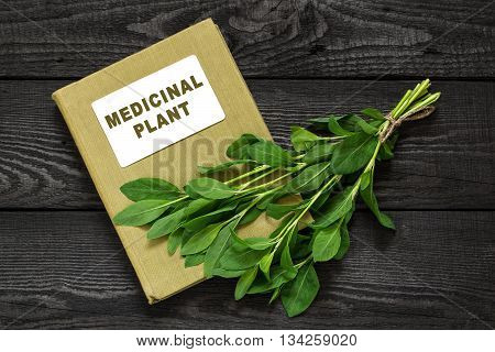 Medicinal plant Polygonum aviculare or common knotgrass (prostrate knotweed birdweed pigweed and lowgrass) and herbalist handbook. Used in herbal medicine cooking food for animals