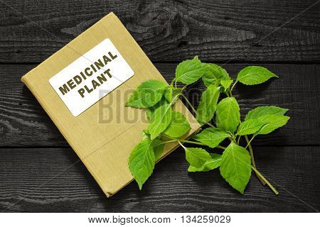 Medicinal plant Goutweed (Aegopodium) and herbalist handbook. Used in herbal medicine cooking bee plant