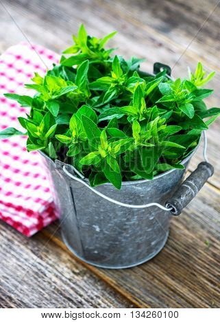 Fresh Herb Marjoram  On Wooden Background