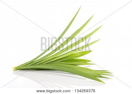 Close Up Green Fresh Pandan Leaves Isolated On White