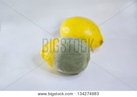 a spoiled lemon exhibiting green mould on one side with a fresh one next to it - concept of food wastage