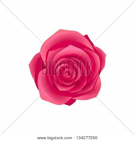 Beauty flower design flat style isolated. Blooming red rose flower with big beautiful petals, summer or spring nature floral plant and graphic blossom exotic natural flora, vector illustration