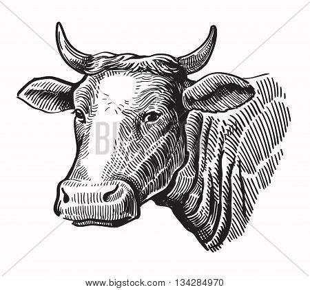 vector black hand drawn cow on white background
