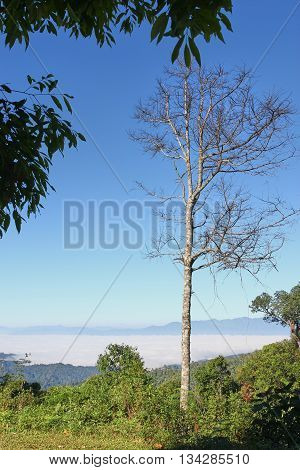 A single dry tree among lush greenery under clear blue sky; mountain and mist background. Concept of loneliness