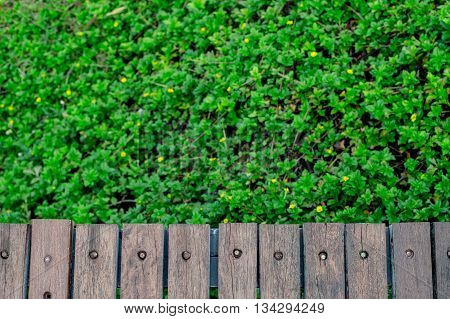 old wooden wall behind green tree background