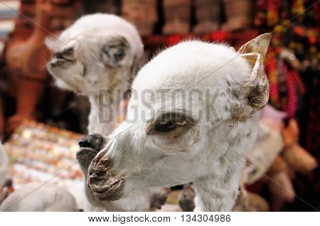 South America La Paz Witches Market dried foeti of llamas on the stall in the la paz for traditional Aymara rituals