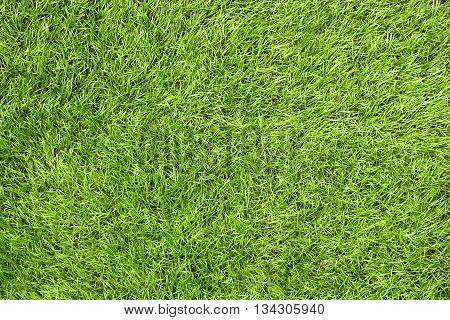 Bright green artificial grass in a football field. This requires a lot of artificial grass