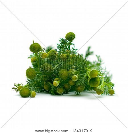 Chamomile herbal medicine - medicinal herbs on white series