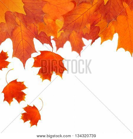 Autumn - red leaves borer isolated on white background