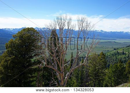 Sawtooth Mountains seen from Idaho's Galena Summit.