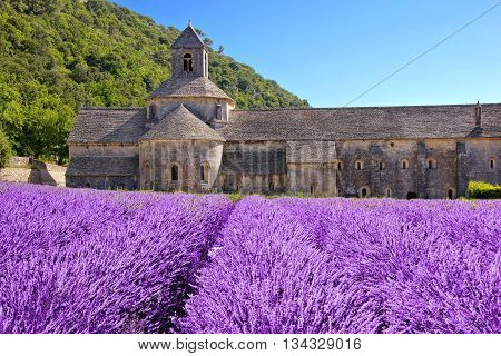 Beautiful Senanque Abbey Behind Fields Of Lavender, Provence, France
