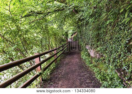 The bicycle path of the Lambro river in Brianza (Lombardy Italy) at spring